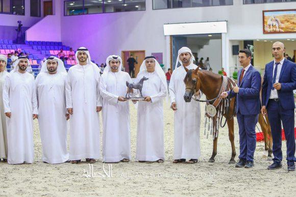 دي سفار  (اف ايه الرشيم x دي سفانا) مربط دبي – الإمارات.