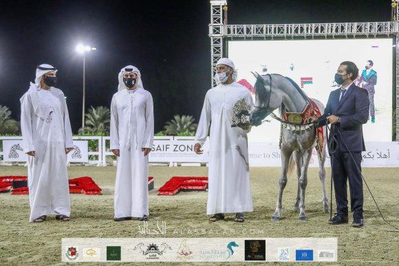 هاتريك ذهبي وفضية لمربط دبي في ختام مهرجان الشارقة ٢٠٢٠  – السلالة المصرية