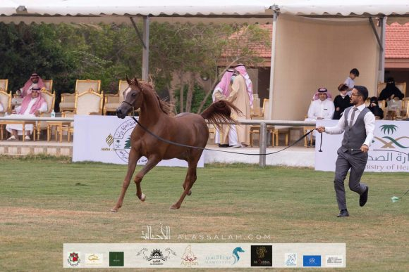Taif 2020 1st day 22020-10-02 at 12.41.10 PM 6
