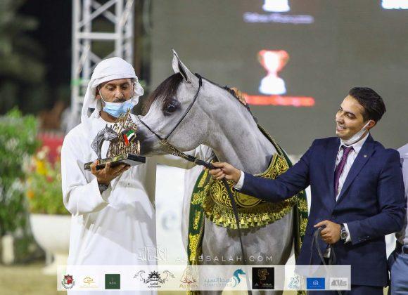 مربط دبي يحصد نصف بطولات مهرجان الشارقة ٢٠٢٠ وتألق لافت لإنتاج المربط