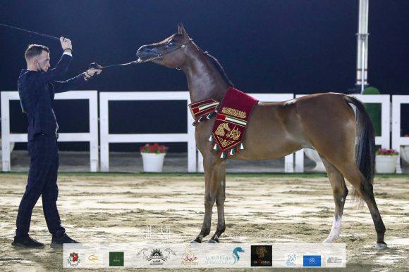 النتائج النهائية بالصور للنسخة الثانية من بطولة الشارقة كلباء للجواد العربي 2020