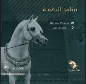 بطولة المملكة لجمال الخيل العربية (كحيلة) 2021 تنطلق مساء غدٍ الاربعاء – برنامج البطولة