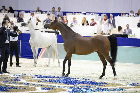 دبي الدولية ٢٠٢١ تعلن الشروط المؤهلة للتسجيل في البطولة