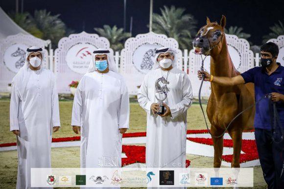 نتائج اليوم الثاني لمهرجان الشارقة ٢٠٢١ الدولي الثاني والعشرون للجواد العربي