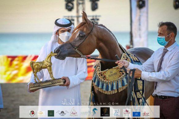 النتائج النهائية بالصور لبطولة الظفرة 2021 لجمال الخيل العربية