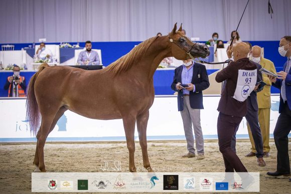 صور مقتطفة من اليوم الاول من بطولة دبي ٢٠٢١ الدولية للجواد العربي