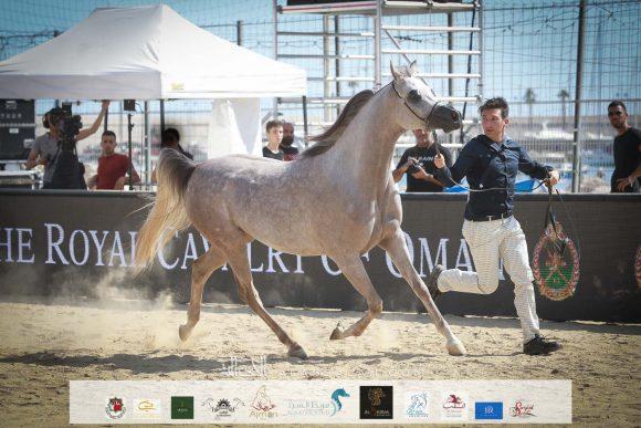 دي جودي (ع ج عزام x ايلي فلامينكا) مربط دبي – الإمارات