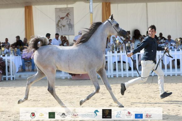 دي شرار (دي سراج x اف تي شيلا) مربط دبي – الإمارات