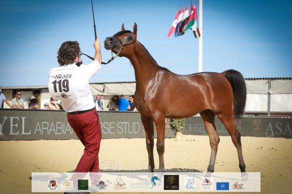 ليهون (اف ايه الرشيم x اراغيا فانيلا) مزرعة الجاسمية- قطر