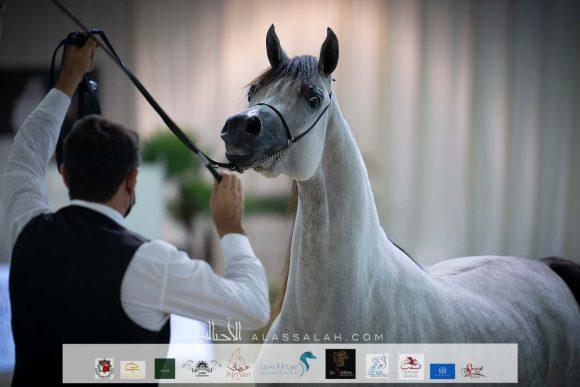 صور مقتطفة لليوم الثاني من بطولة الإمارات الوطنية 2021 لجمال الخيول العربية