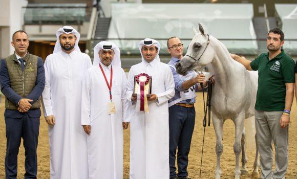 انطلاق منافسات كأس قطر الأول 2021 لمنتجي الخيل العربية الأصيلة