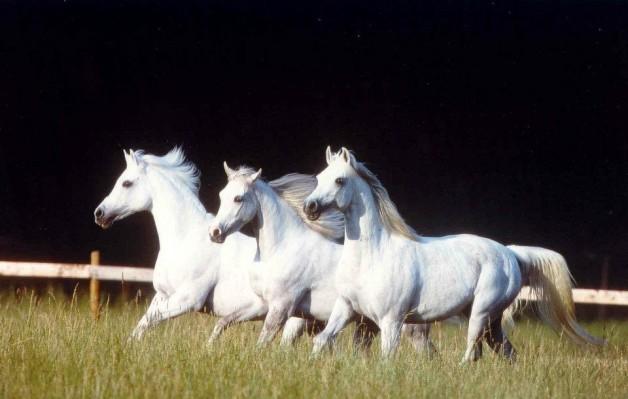 زوجان بارزان في إنتاج الخيول العربية يتبرعان بـ 3 ملايين دولار أمريكي لمختبر خصوبة الخيول بجامعة ولاية كلورادو
