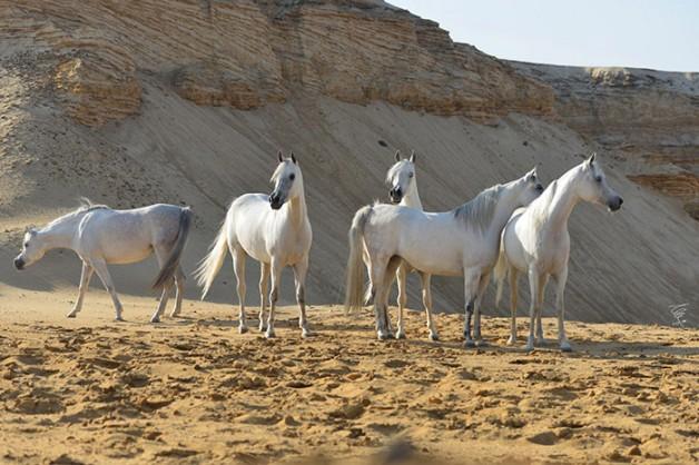 الخيول ترى أشياء لا يستطيع الإنسان رؤيتها