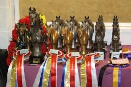 نتائج بطولة تاور لاند الدولية ٢٠١٣ لجمال الخيل العربية الأصيلة