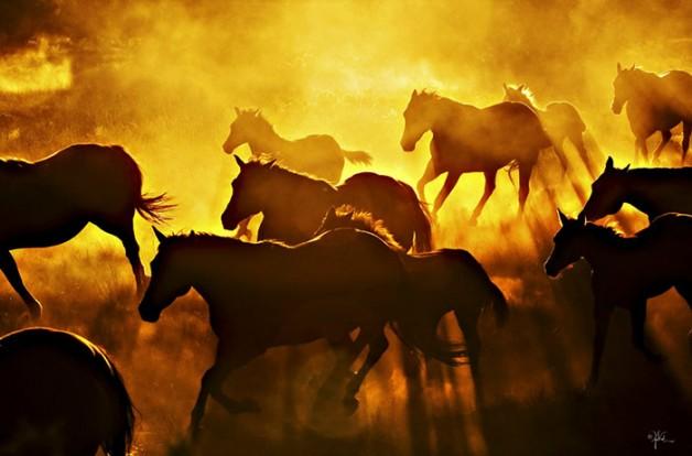 بالفيديو .. إصابة وتلفيات بسبب خيول شرطة المكسيك