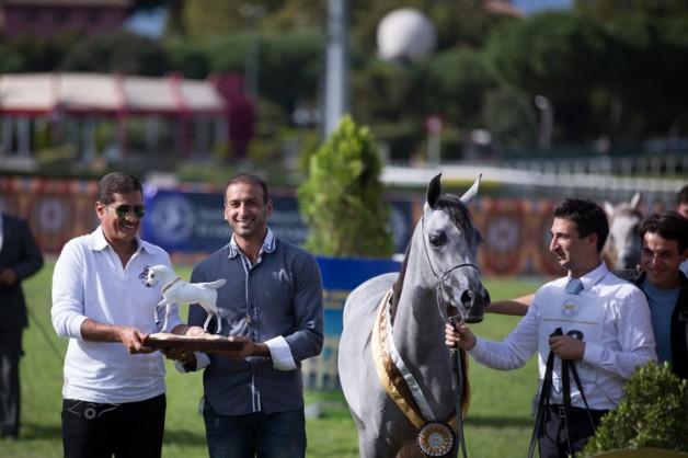مربط دبي يتوج بلقب المهرات وأفضل مربٍّ ومنتج في بطولة العالم للخيل المصرية