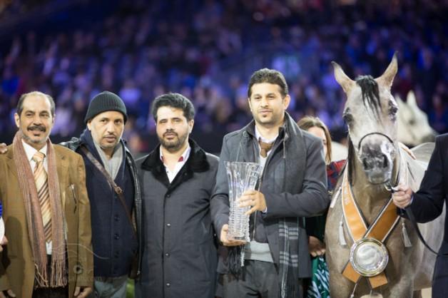 سيطرة خليجية على معظم جوائز بطولة العالم لجمال الخيل العربية ٢٠١٣