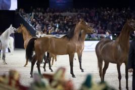غداً .. أجمل خيول العالم تتنافس في «باريس 2016» في نسختها الـ36