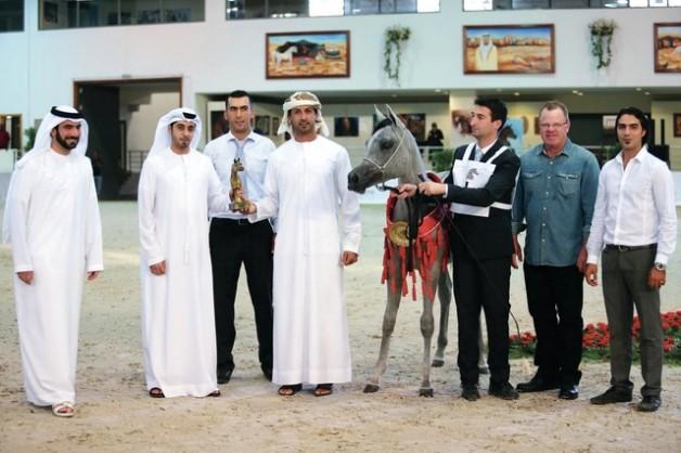 خيول محمد بن سعود تتألق في مهرجان الشارقة الدولي