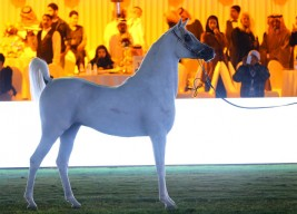 مركز الملك عبدالعزيز ينوه على ضرورة تسجيل العارضين رسمياً للمشاركة في بطولات الـ A والـ Title