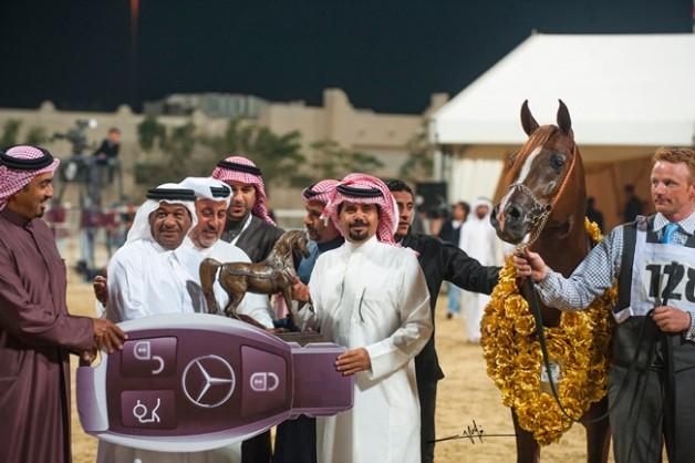 «المعود» يباغت ساحات السلالة المصرية بإنتزاع لقب الأفحل بـ(كلور مي كول) و «الوعب» الأكثر حصداً للجوائز ببطولة قطر ٢٠١٤ للسلالة المصرية