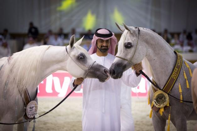مقتطفات من بطولة دبي الدولية لجمال الجواد العربي ٢٠١٤ من اليوم الأول والثاني
