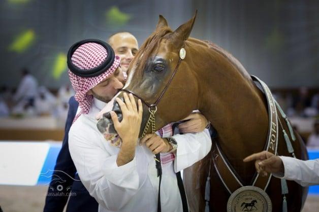 Photo gallery from the finals of Dubai International arabian horses show 2014