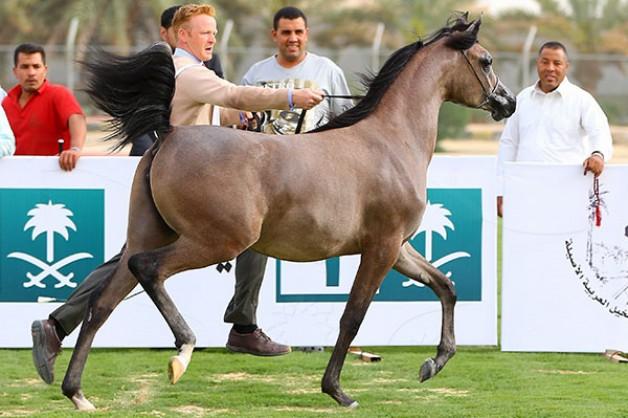 يتوج الأمير خالد بن سلطان بن عبدالعزيز مساء اليوم أبطال بطولة الأحساء