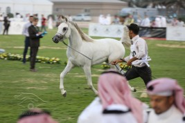 تأجيل إقامة البطولة الوطنية العاشرة لجمال الخيل العربية الأصيلة بمحافظة الأحساء لعام ٢٠١٩م