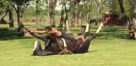 فيديو: (يوغا الخيول) تقنية جديدة لترويض الخيول العصبية