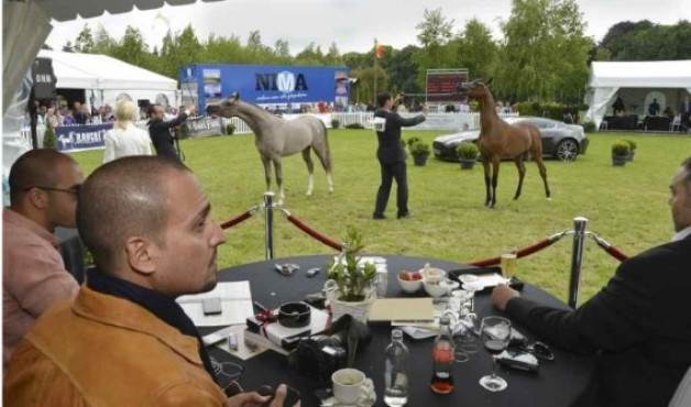 Bruges Arabian Horse Event attracts wealthy people back to Bruges