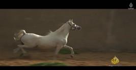 Documentary: Arabian horse .. a gift purebred desert