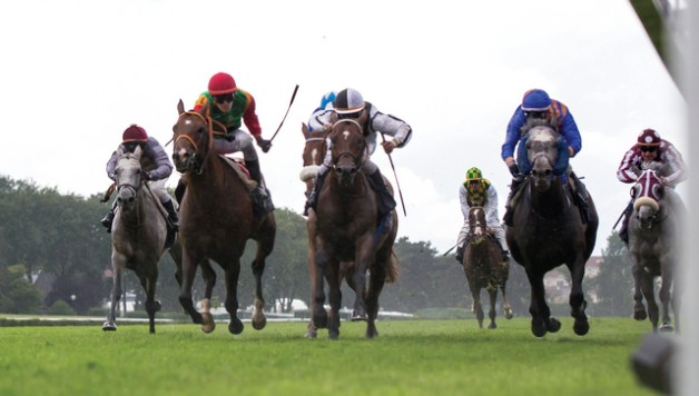 «جت تاوي» يهدي الخيالة العُمانية كأس رئيس دولة الإمارات للخيول العربية في باريس…