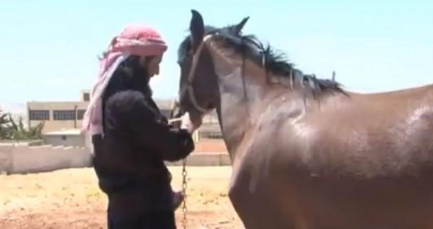 فيديو : عودة تربية الخيول العربية الأصيلة لريف إدلب