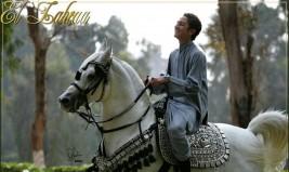 الفساد يرقص فى محطة الزهراء للخيول .. ومصر تخسر الملايين بسبب توقف التصدير والعضوية الدولية مهددة بالتعليق