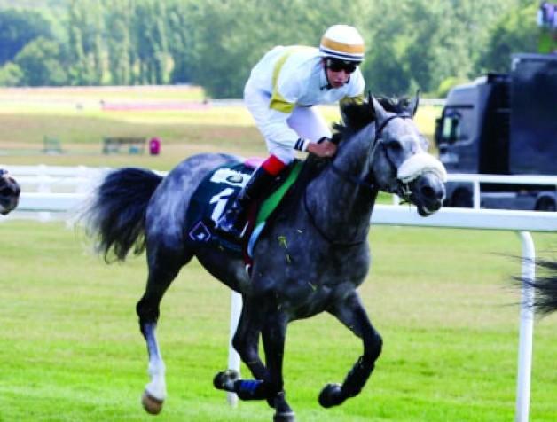 الجولة الثانية إضافة جديدة في مهرجان منصور بن زايد العالمي السادس للخيول