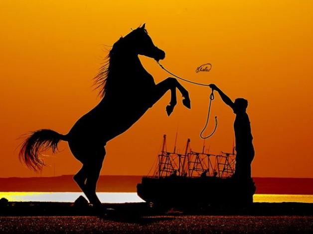 دراسة: تربية الخيول تخفف من أعراض الزهايمر