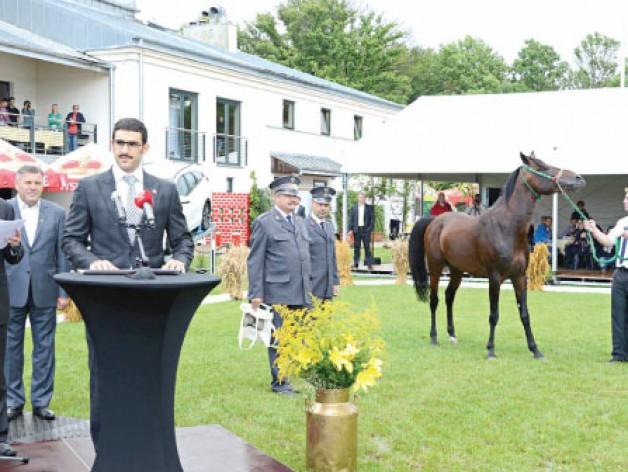 ملك البحرين يهدي بولندا الحصان (كحيلان عافص) إسهاماً في دعم الحفاظ على سلالة الخيل العربية