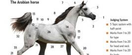 The Arabian horse CHART