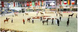 نتائج بطولة الشارقة الدولية ٢٠١١ للخيل العربية الأصيلة
