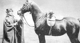 الخيول العربية.. البحث عن الأصيل من «عقيلات القصيم» إلى «الليدي آن بلنت»