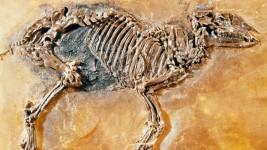 مستحاثة في الهند تكشف الأصل المشترك بين الخيول ووحيد القرن