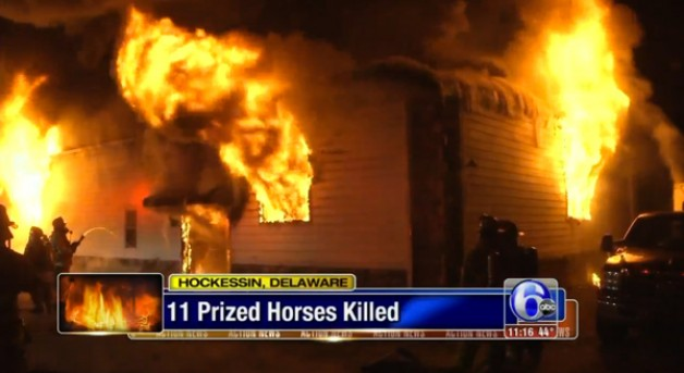 At least 10 Arabian horses die in barn fire in Delaware, in the United States