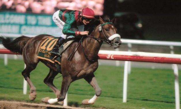 تأسيس «الوثبة للفحول» في الإمارات لتسويق وترويج تربية الخيول العربية