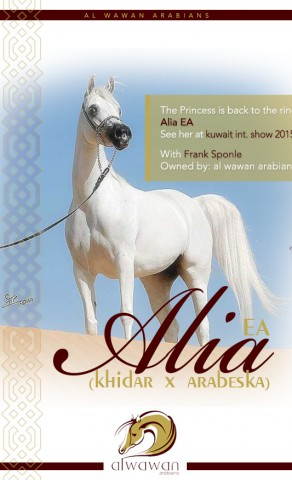The Princess is back to the ring – Alia EA for al wawan arabians