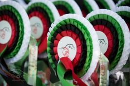 215 خيلا تتنافس في بطولة أبوظبي الدولية ٢٠٢٠ لجمال الخيول العربية