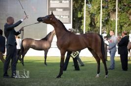 مقتطفات من بطولة أبوظبي الدولية لجمال الخيل العربية الأصيلة ٢٠١٥