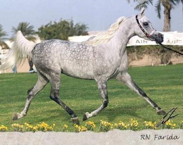 بطولة قطر الدولية للجمال الأقدم والأعرق في منطقة الشرق الأوسط