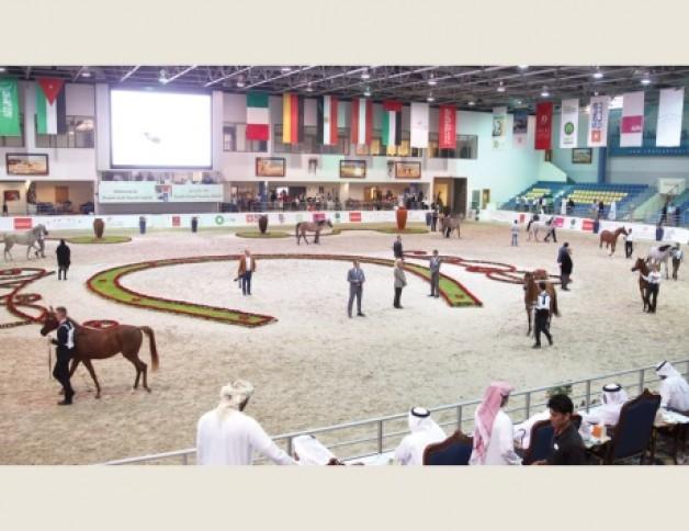 بطولة الشارقة الدولية للجواد العربي ٢٠١٥ تختتم اليوم