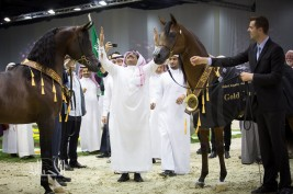 Photo Gallery for the Final day of Dubai 2015 International Arabian Horses Championship